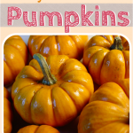 5 Fun & Unique Ways to Decorate Pumpkins